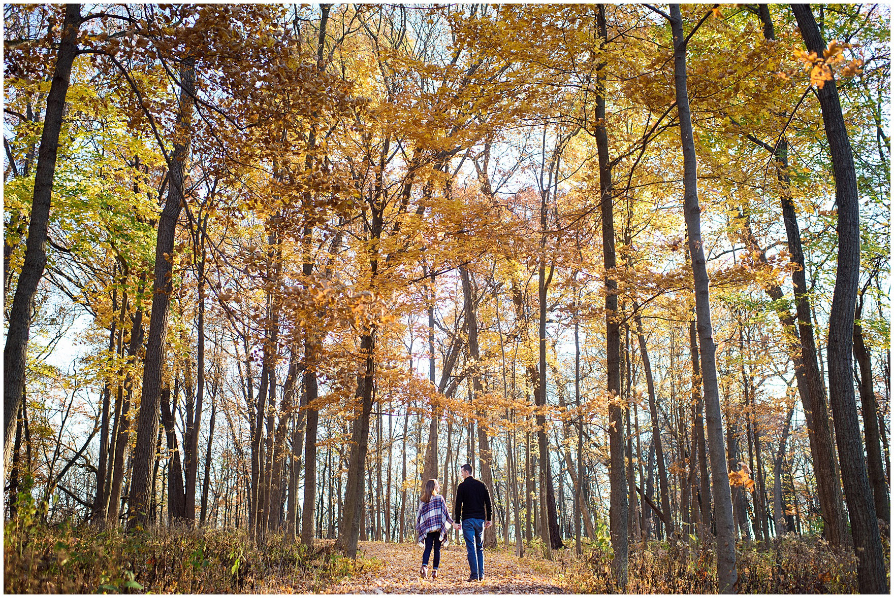 A couple walks among the tall trees with golden leaves during their fall woods engagement session.