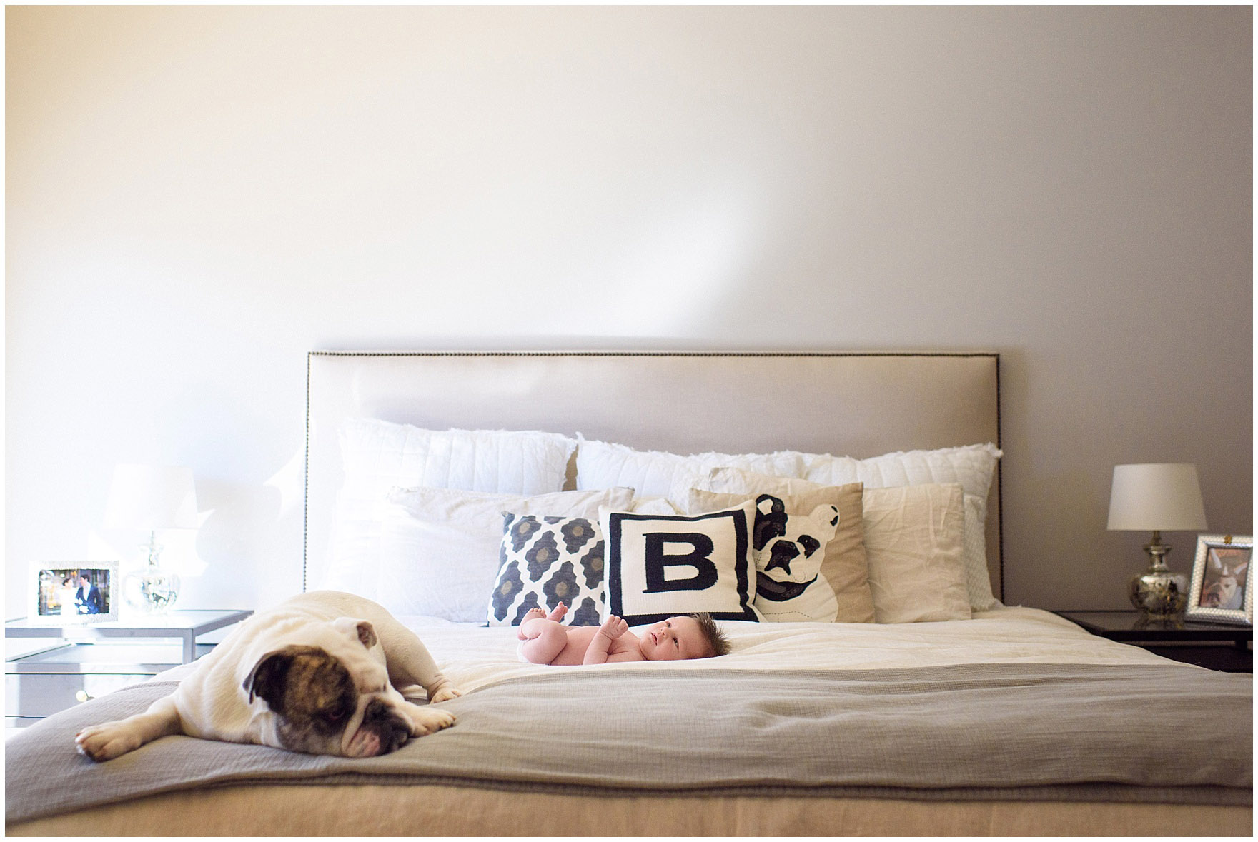 A baby lays on the bed next to the family pet bulldog during a Chicago newborn baby photography session.