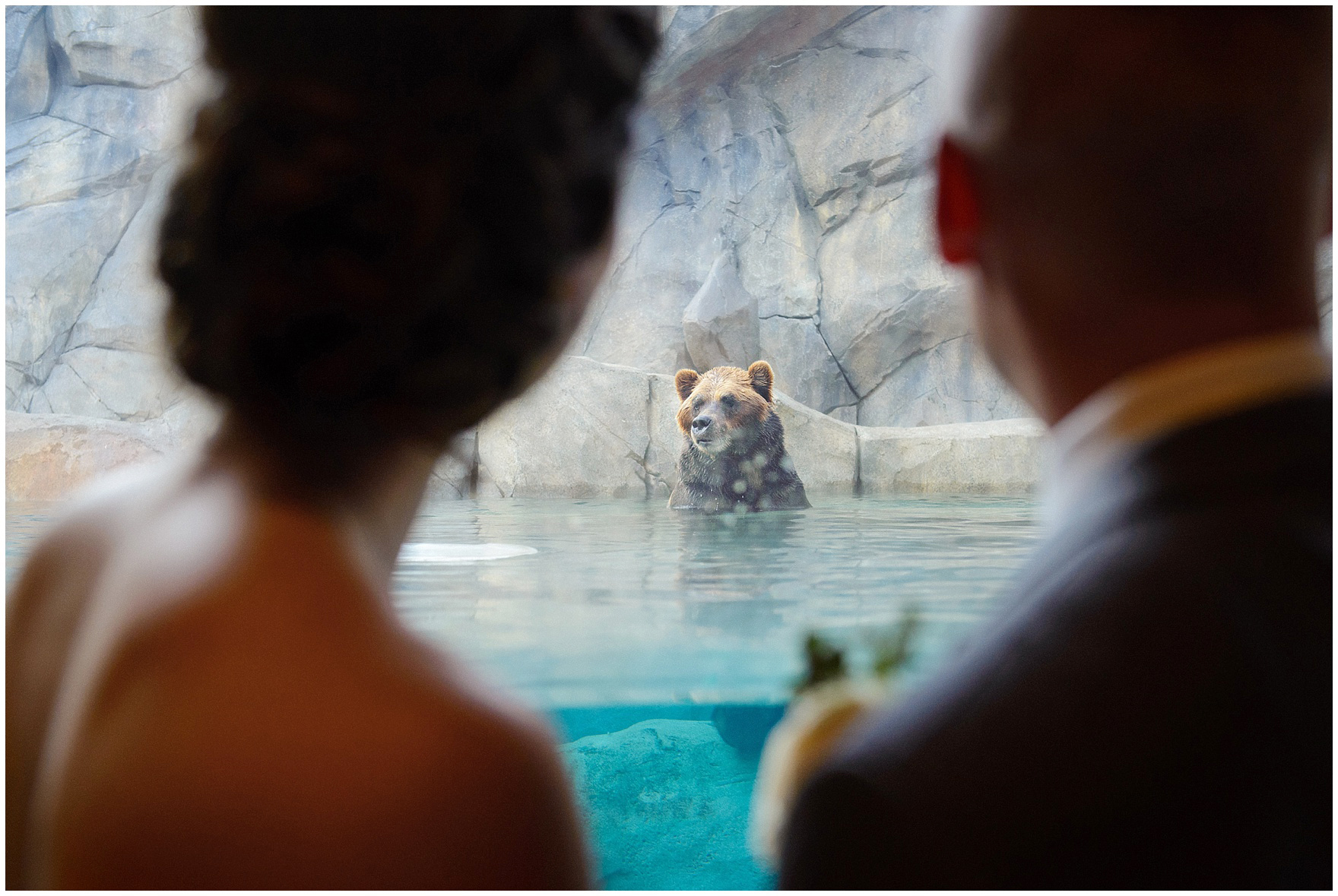 Guest enjoy cocktail hour in the Great Wilderness Bear exhibit at a St. Francis Xavier and Brookfield Zoo Chicago wedding.