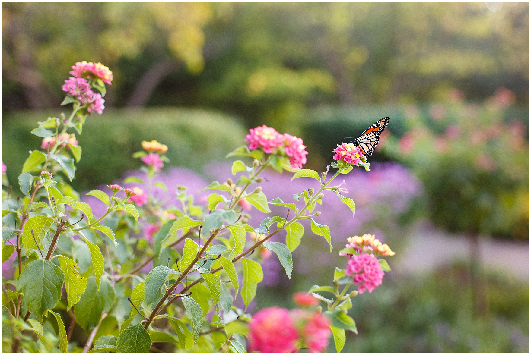Flowers with a butterfly during portraits at Cantigny Park for a St. Josephs Downers Grove Pinstripes Oak Brook, Illinois wedding.