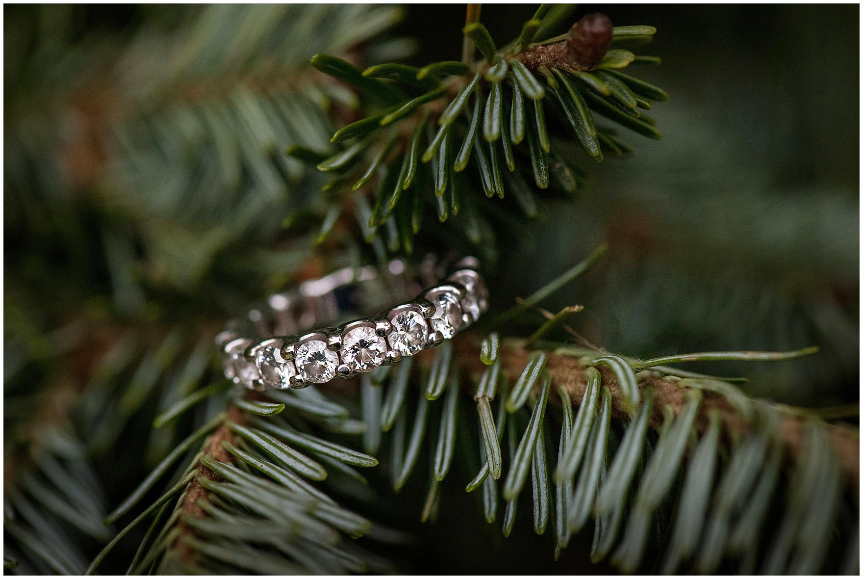 A close up of a diamond engagement band on an evergreen branch during a downtown Chicago classic engagement photography session.